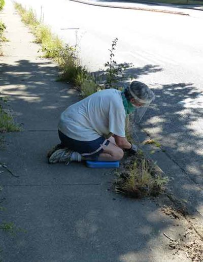 Volunteer weeding for kirklandweeds program