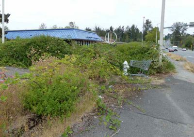 Overgrown weeds at Arco Gas Station Kirkland